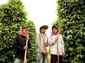 De peperplantage in Kampot